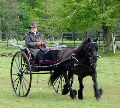Me trotting with my fibreglass carriage at the Stallion Show 2003